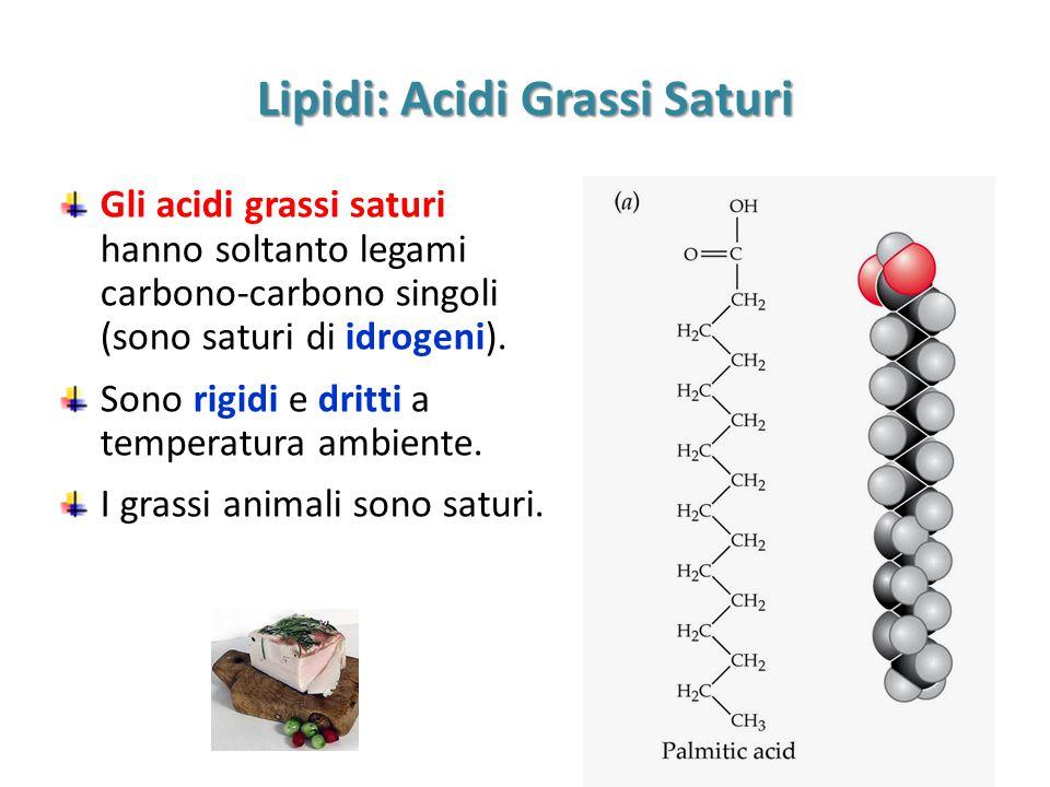 Lipidi: Acidi Grassi Saturi Gli acidi grassi saturi hanno soltanto legami carbono-carbono singoli (sono saturi di idrogeni). Sono rigidi e dritti a te