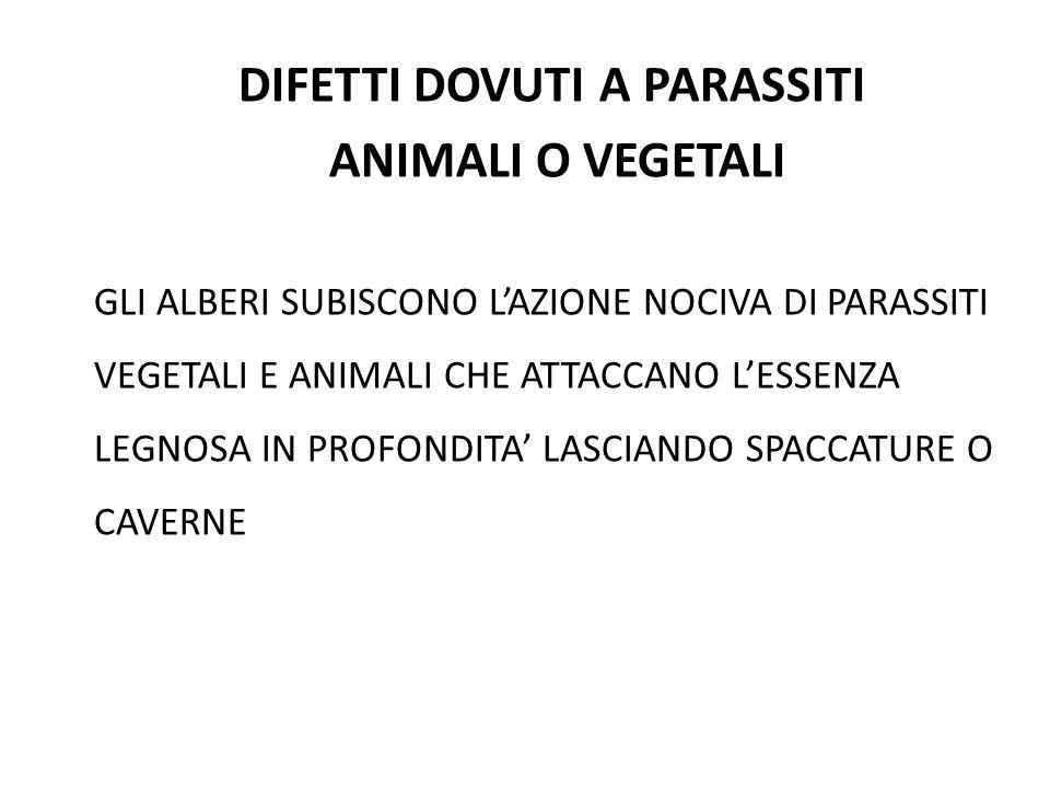 DIFETTI DOVUTI A PARASSITI ANIMALI O VEGETALI GLI ALBERI SUBISCONO L'AZIONE NOCIVA DI PARASSITI VEGETALI E ANIMALI CHE ATTACCANO L'ESSENZA LEGNOSA IN PROFONDITA' LASCIANDO SPACCATURE O CAVERNE