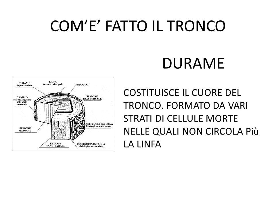 COM'E' FATTO IL TRONCO DURAME COSTITUISCE IL CUORE DEL TRONCO.