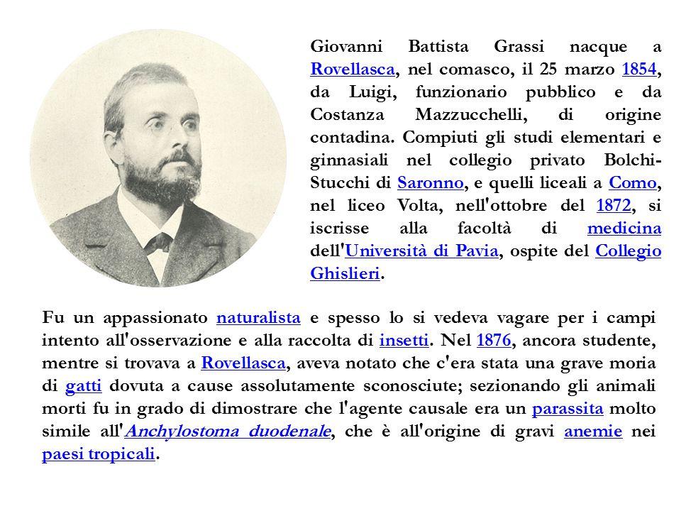 Giovanni Battista Grassi nacque a Rovellasca, nel comasco, il 25 marzo 1854, da Luigi, funzionario pubblico e da Costanza Mazzucchelli, di origine con