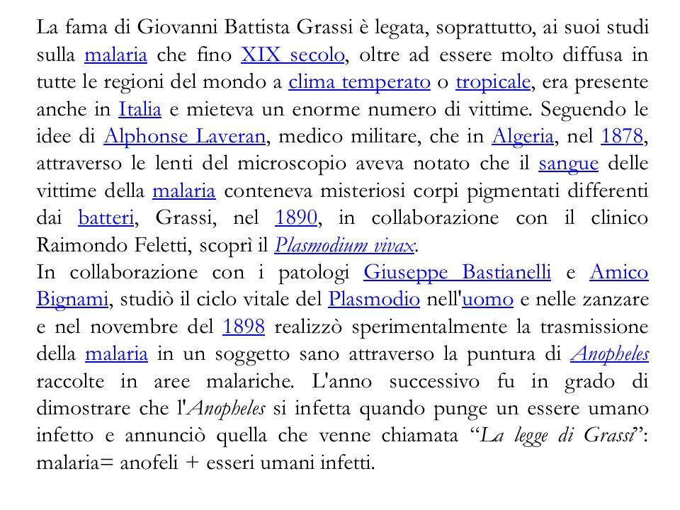 La fama di Giovanni Battista Grassi è legata, soprattutto, ai suoi studi sulla malaria che fino XIX secolo, oltre ad essere molto diffusa in tutte le