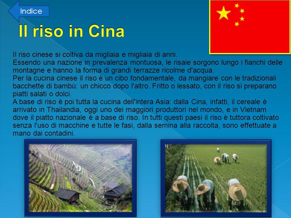 Il riso cinese è giunto anche in Giappone, dove viene chiamato madre e si coltiva la specie Japonica dalla quale derivano alcune varietà del riso italiano.