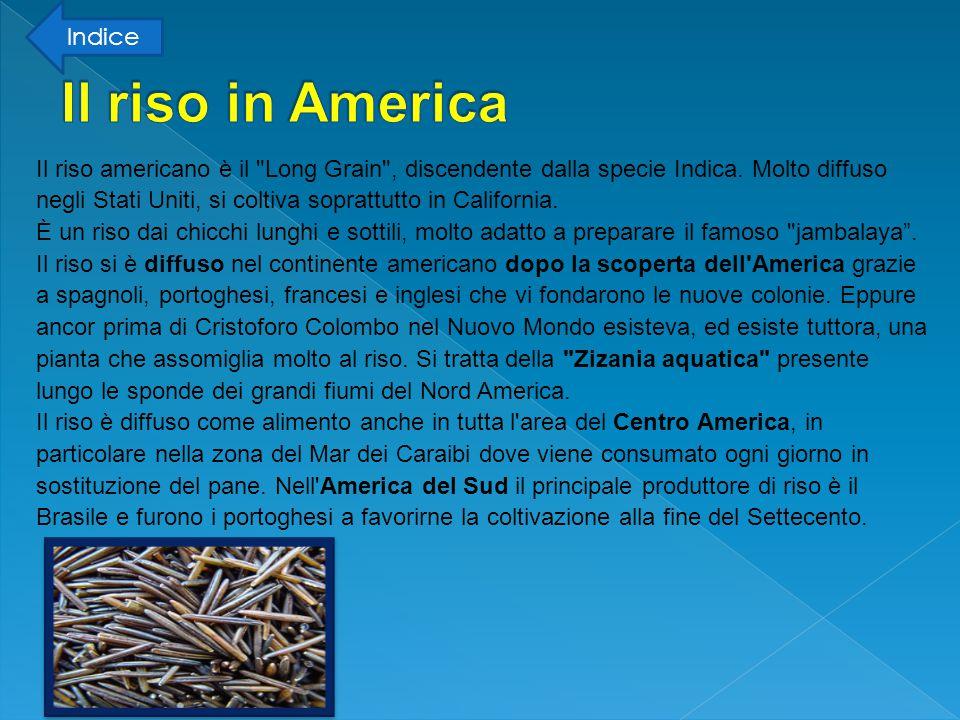 Il riso americano è il Long Grain , discendente dalla specie Indica.