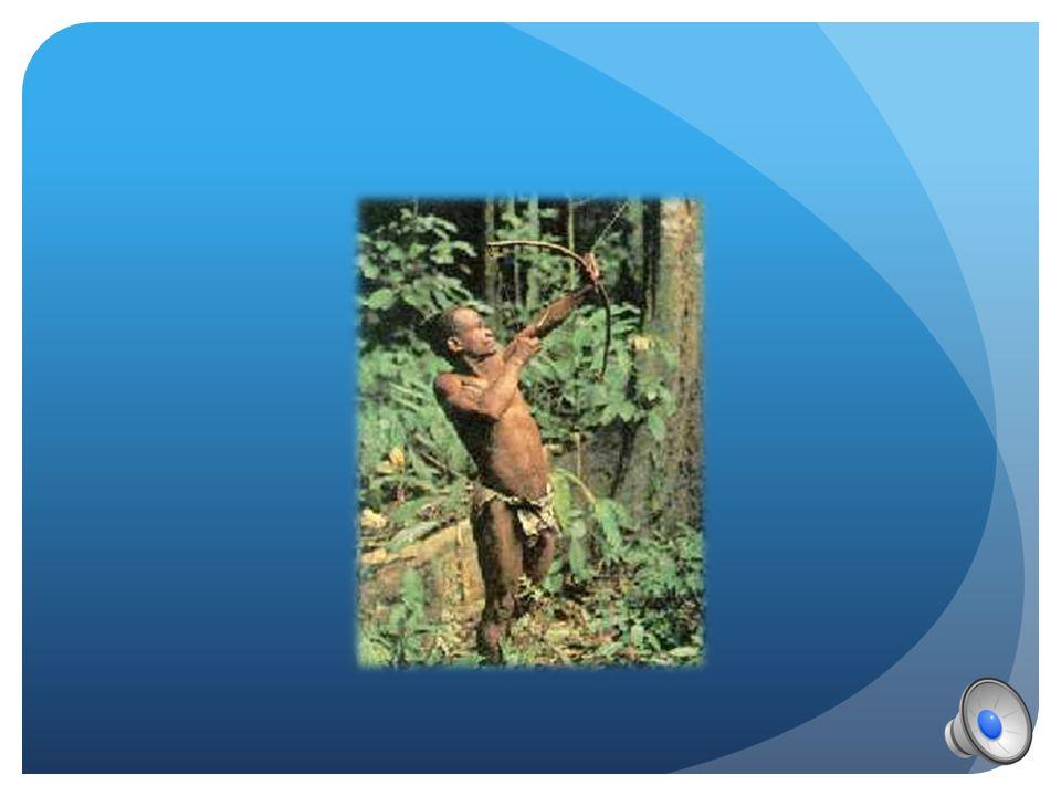 COME VIVONO  Sono cacciatori – raccoglitori, cacciano con freccia e arco avvelenato  Le donne pescano  Praticano cambi con i popoli vicini  Lavora