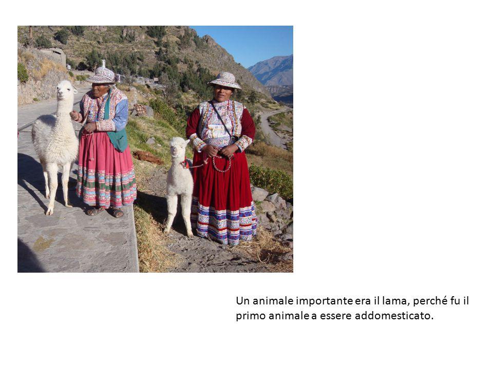 Un animale importante era il lama, perché fu il primo animale a essere addomesticato.