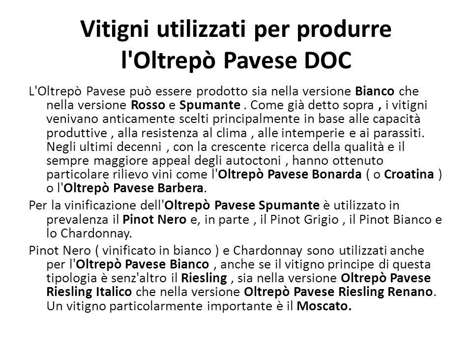 Vitigni utilizzati per produrre l Oltrepò Pavese DOC L Oltrepò Pavese può essere prodotto sia nella versione Bianco che nella versione Rosso e Spumante.