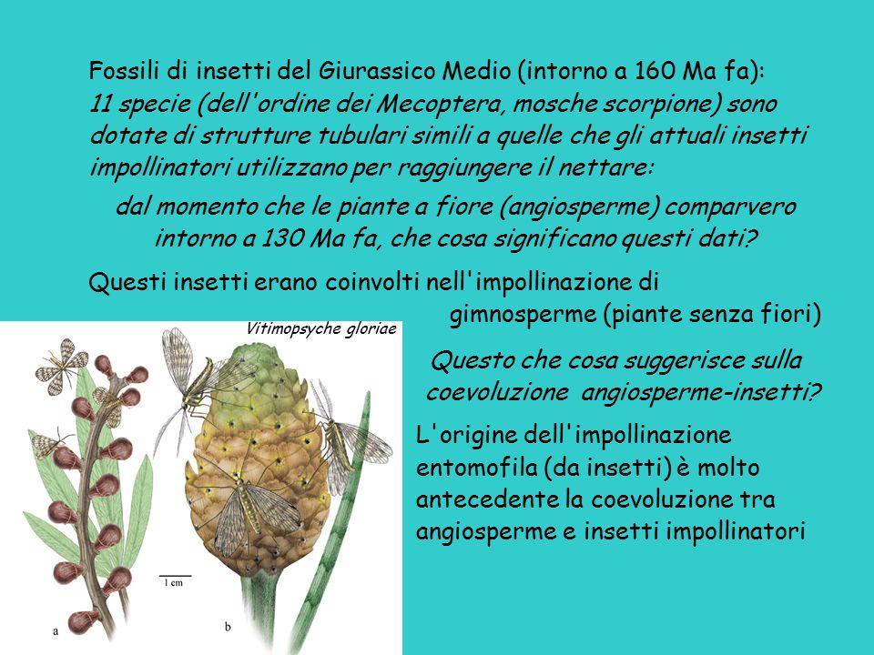 Fossili di insetti del Giurassico Medio (intorno a 160 Ma fa): 11 specie (dell'ordine dei Mecoptera, mosche scorpione) sono dotate di strutture tubula