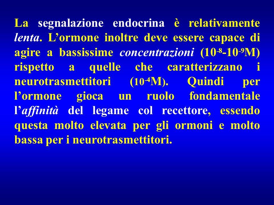 La segnalazione endocrina è relativamente lenta. L'ormone inoltre deve essere capace di agire a bassissime concentrazioni (10 -8 -10 -9 M) rispetto a