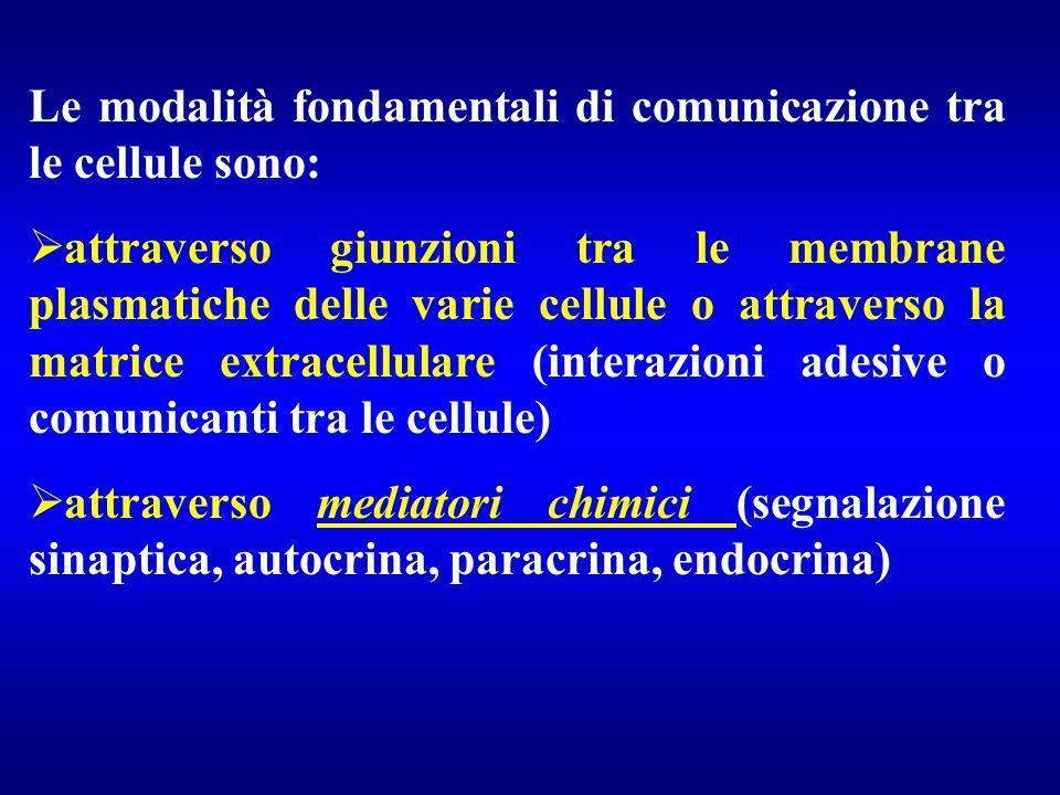 Le modalità fondamentali di comunicazione tra le cellule sono:  attraverso giunzioni tra le membrane plasmatiche delle varie cellule o attraverso la
