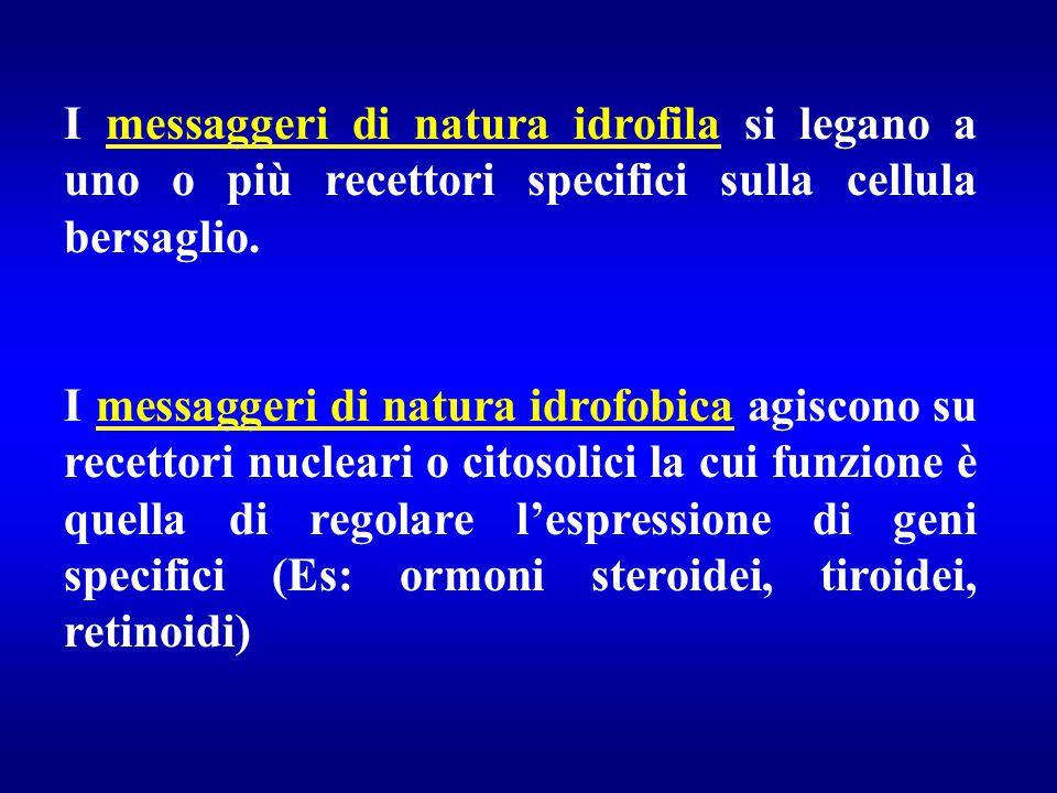 I messaggeri di natura idrofila si legano a uno o più recettori specifici sulla cellula bersaglio. I messaggeri di natura idrofobica agiscono su recet