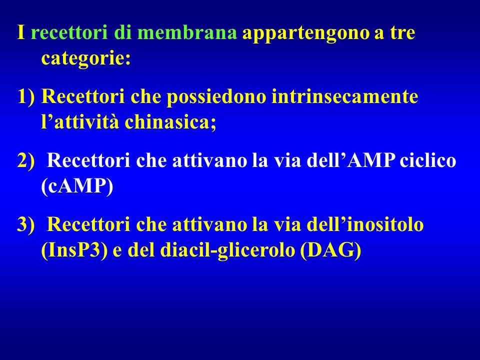 I recettori di membrana appartengono a tre categorie: 1)Recettori che possiedono intrinsecamente l'attività chinasica; 2) Recettori che attivano la vi