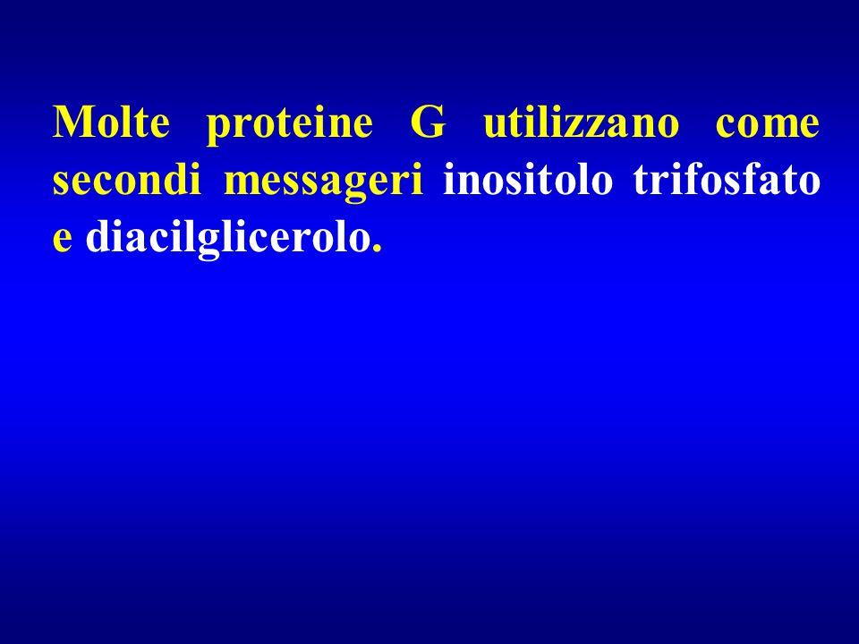 Molte proteine G utilizzano come secondi messageri inositolo trifosfato e diacilglicerolo.