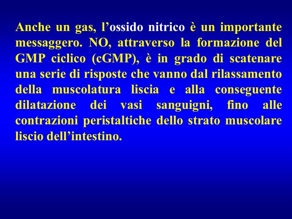 Anche un gas, l'ossido nitrico è un importante messaggero. NO, attraverso la formazione del GMP ciclico (cGMP), è in grado di scatenare una serie di r