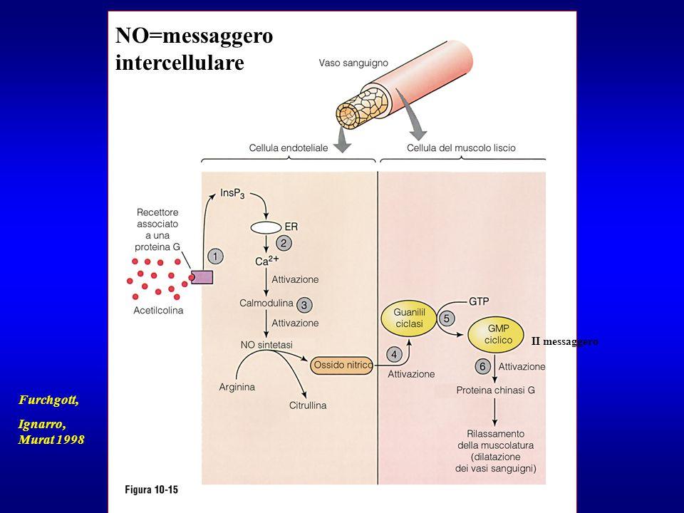 II messaggero Furchgott, Ignarro, Murat 1998 NO=messaggero intercellulare