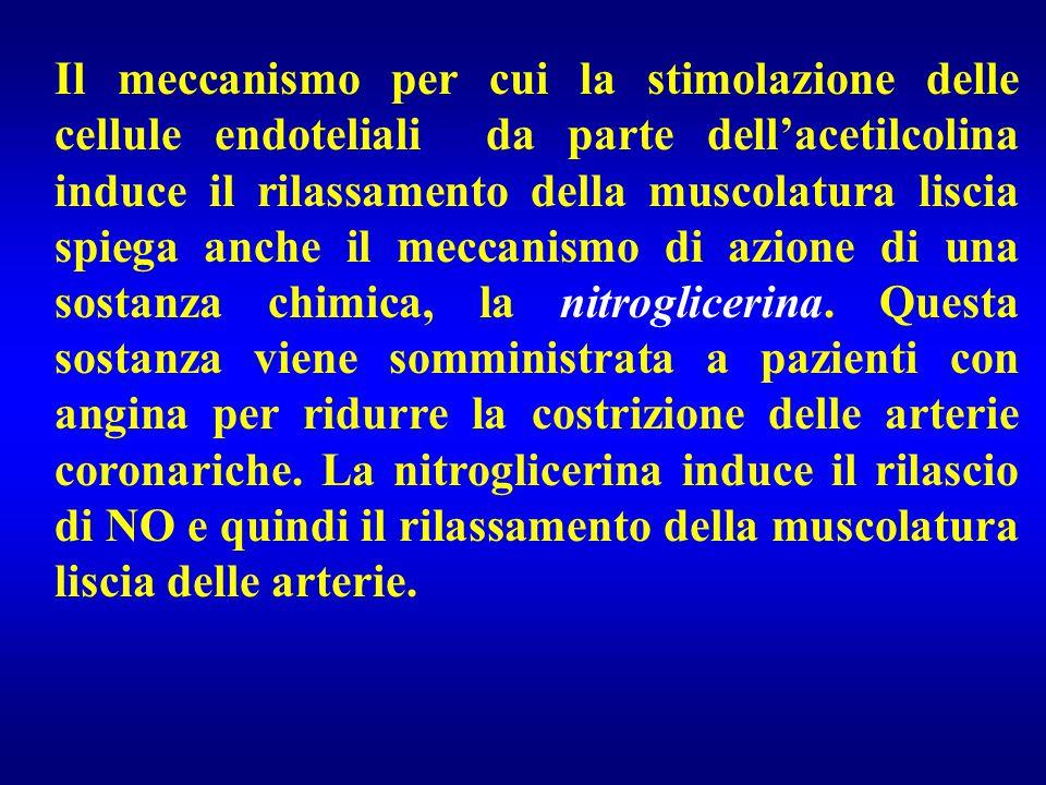 Il meccanismo per cui la stimolazione delle cellule endoteliali da parte dell'acetilcolina induce il rilassamento della muscolatura liscia spiega anch