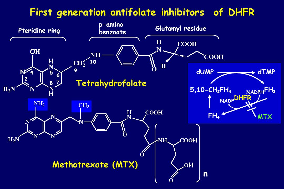 First generation antifolate inhibitors of DHFR p-amino benzoate Methotrexate (MTX) n H H Tetrahydrofolate Pteridine ring Glutamyl residue 4 2 5 6 7 8