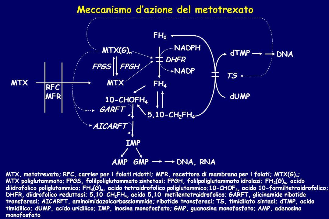 MTX, metotrexato; RFC, carrier per i folati ridotti; MFR, recettore di mambrana per i folati; MTX(G) n ; MTX poliglutammato; FPGS, folilpoliglutammato