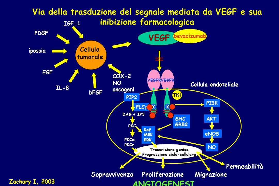 Proliferazione VEGFR VEGF bevacizumab PI3K Raf MEK ERK AKT eNOS Trascrizione genica Progressione ciclo-cellulare Zachary I, 2003 Cellula endoteliale K