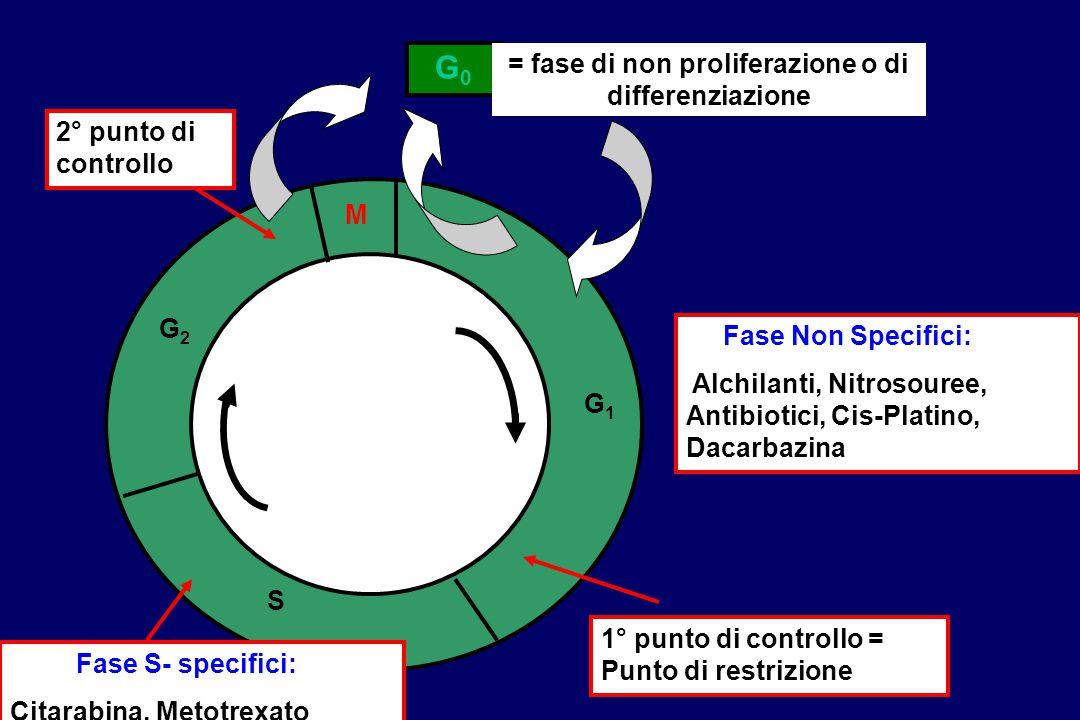 M G1G1 S G2G2 1° punto di controllo = Punto di restrizione 2° punto di controllo G0G0 = fase di non proliferazione o di differenziazione Fase S- speci