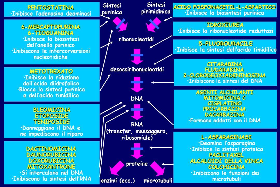 Principali chemioterapici antiblastici utili in terapia oncologica (I) Alchilanti Mecloretamina* Ciclofosfamide Ifosfamide Melfalan Clorambucil Busulfano Tiotepa Altretamina* Dacarbazina Temozolomide Nitrosouree Carmustina* Lomustina Fotemustina Streptozotocina* Composti di coordinazione del platino Cisplatino Carboplatino Oxaliplatino Antimetaboliti Metotrexato Raltitrexed Citarabina Gemcitabina Fluorouracile Capecitabina Tegafur UFT** Mercaptopurina Tioguanina Fludarabina Cladribina Pentostatina Idrossiurea *non disponibile in commercio in Italia;** associazione precostituita con uracile/tegafur in rapporto molare 1:4 Informatore farmaceutico 2003