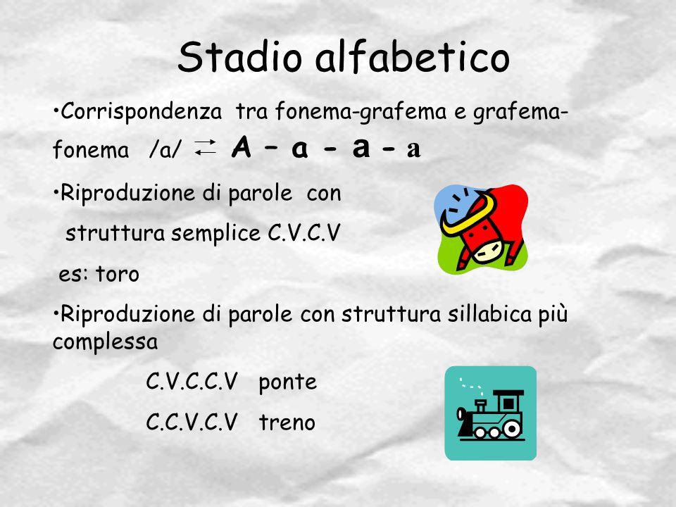 Stadio alfabetico Corrispondenza tra fonema-grafema e grafema- fonema /a/ A – a - a - a Riproduzione di parole con struttura semplice C.V.C.V es: toro