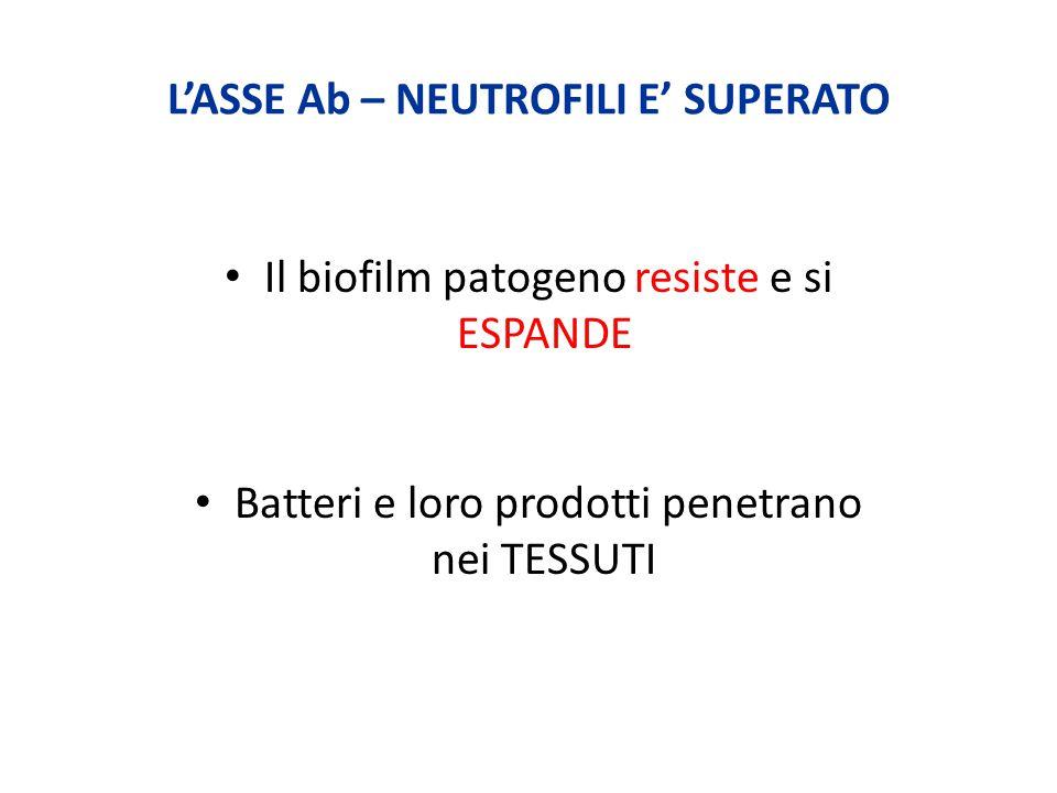 L'ASSE Ab – NEUTROFILI E' SUPERATO Il biofilm patogeno resiste e si ESPANDE Batteri e loro prodotti penetrano nei TESSUTI