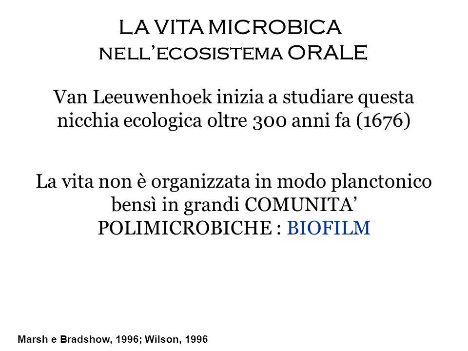 LA VITA MICROBICA nell'ecosistema ORALE Van Leeuwenhoek inizia a studiare questa nicchia ecologica oltre 300 anni fa (1676) La vita non è organizzata