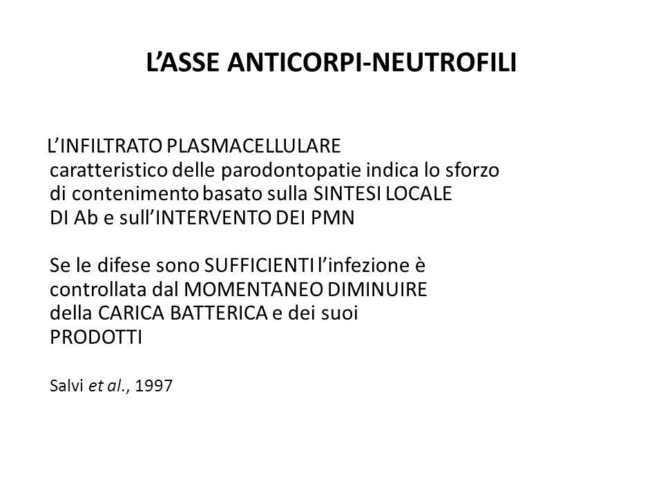 L'ASSE ANTICORPI-NEUTROFILI L'INFILTRATO PLASMACELLULARE caratteristico delle parodontopatie indica lo sforzo di contenimento basato sulla SINTESI LOC