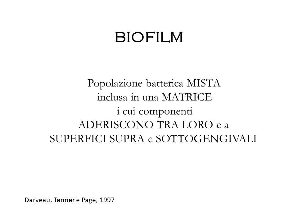 BIOFILM Popolazione batterica MISTA inclusa in una MATRICE i cui componenti ADERISCONO TRA LORO e a SUPERFICI SUPRA e SOTTOGENGIVALI Darveau, Tanner e