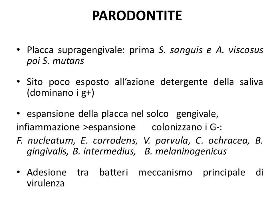 PARODONTITE Placca supragengivale: prima S. sanguis e A. viscosus poi S. mutans Sito poco esposto all'azione detergente della saliva (dominano i g+) e