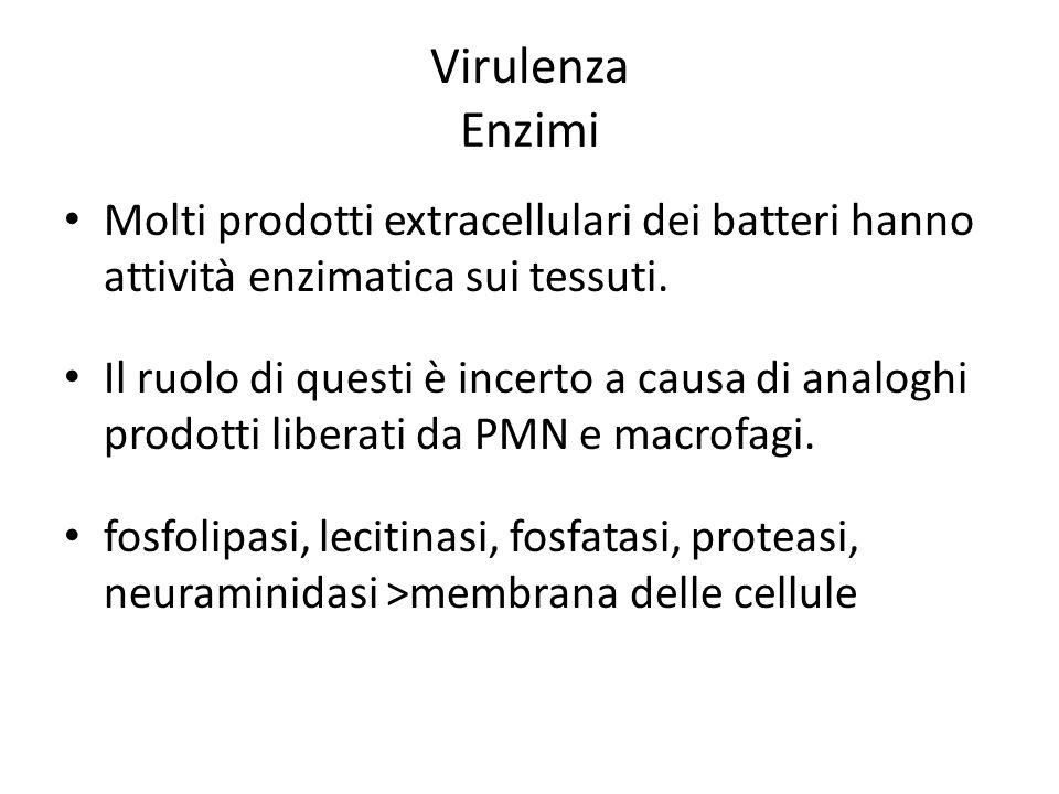 Virulenza Enzimi Molti prodotti extracellulari dei batteri hanno attività enzimatica sui tessuti. Il ruolo di questi è incerto a causa di analoghi pro