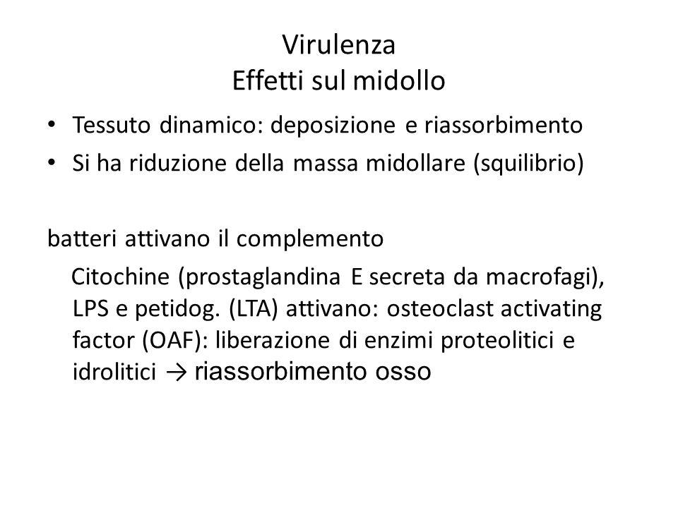 Virulenza Effetti sul midollo Tessuto dinamico: deposizione e riassorbimento Si ha riduzione della massa midollare (squilibrio) batteri attivano il co