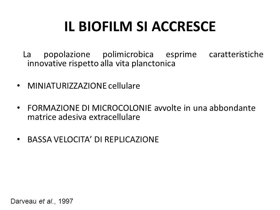 IL BIOFILM SI ACCRESCE La popolazione polimicrobica esprime caratteristiche innovative rispetto alla vita planctonica MINIATURIZZAZIONE cellulare FORM
