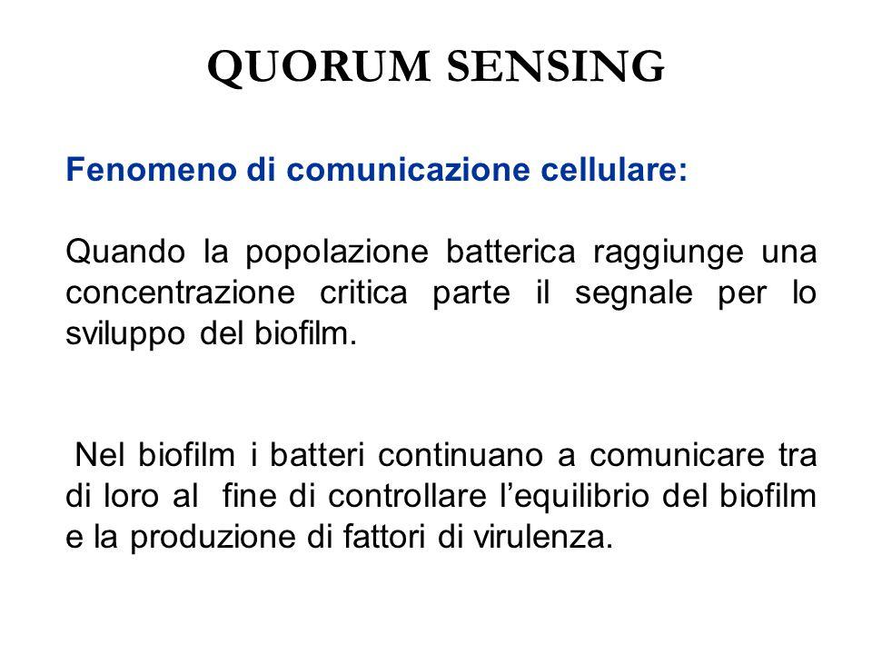 QUORUM SENSING Fenomeno di comunicazione cellulare: Quando la popolazione batterica raggiunge una concentrazione critica parte il segnale per lo svilu