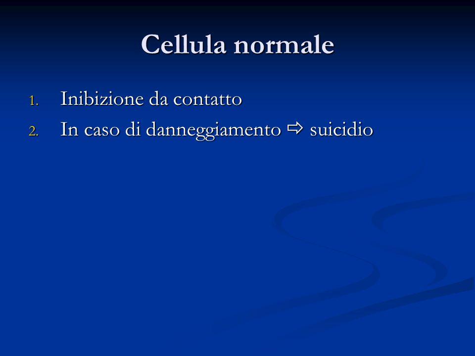 Cellula normale 1. Inibizione da contatto 2. In caso di danneggiamento  suicidio