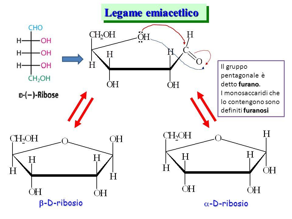 Legame emiacetlico  -D-ribosio  -D-ribosio furano Il gruppo pentagonale è detto furano. furanosi I monosaccaridi che lo contengono sono definiti fur