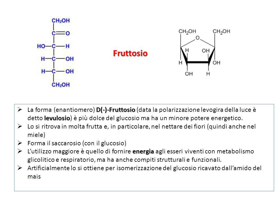 Fruttosio D(-)-Fruttosio levulosio  La forma (enantiomero) D(-)-Fruttosio (data la polarizzazione levogira della luce è detto levulosio) è più dolce