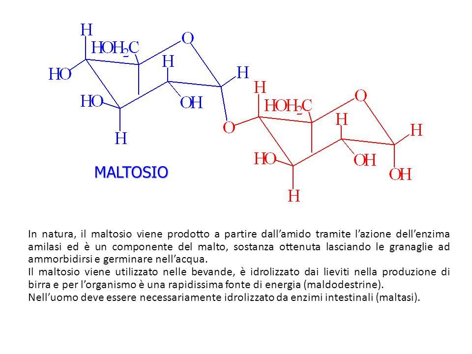 MALTOSIO In natura, il maltosio viene prodotto a partire dall'amido tramite l'azione dell'enzima amilasi ed è un componente del malto, sostanza ottenu