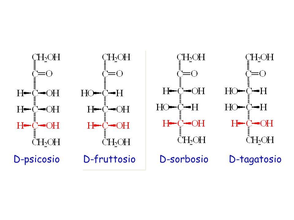 D-psicosioD-fruttosioD-sorbosioD-tagatosio