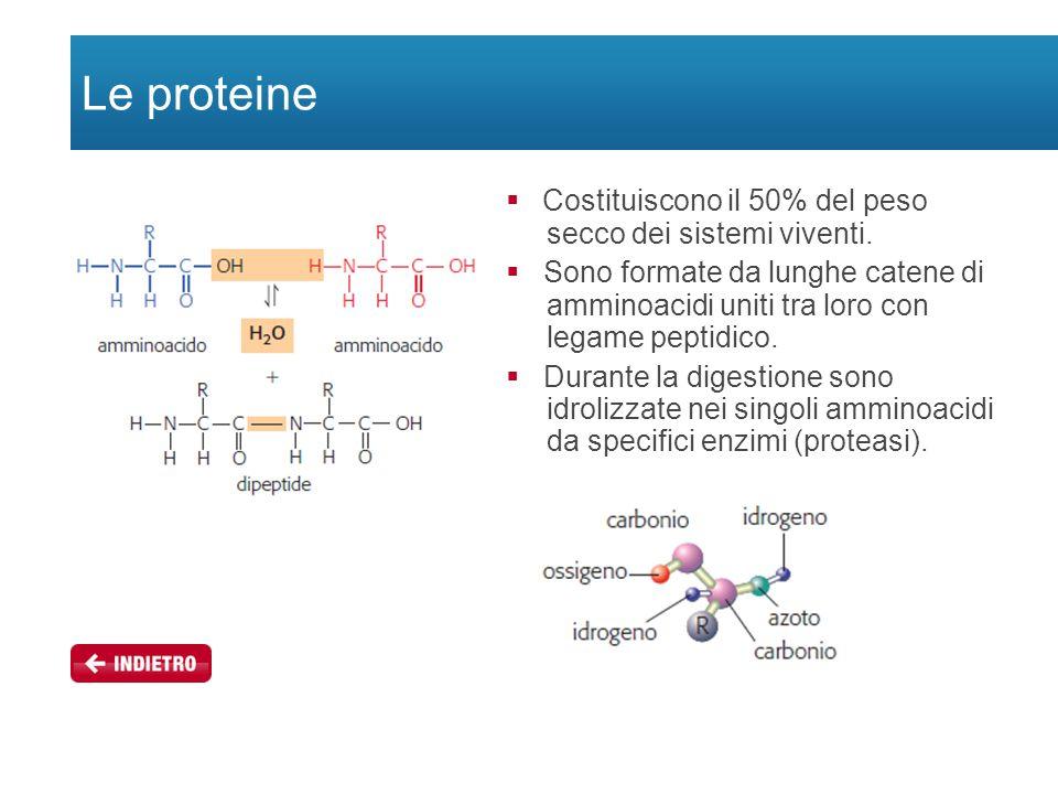 Le proteine  Costituiscono il 50% del peso secco dei sistemi viventi.  Sono formate da lunghe catene di amminoacidi uniti tra loro con legame peptid