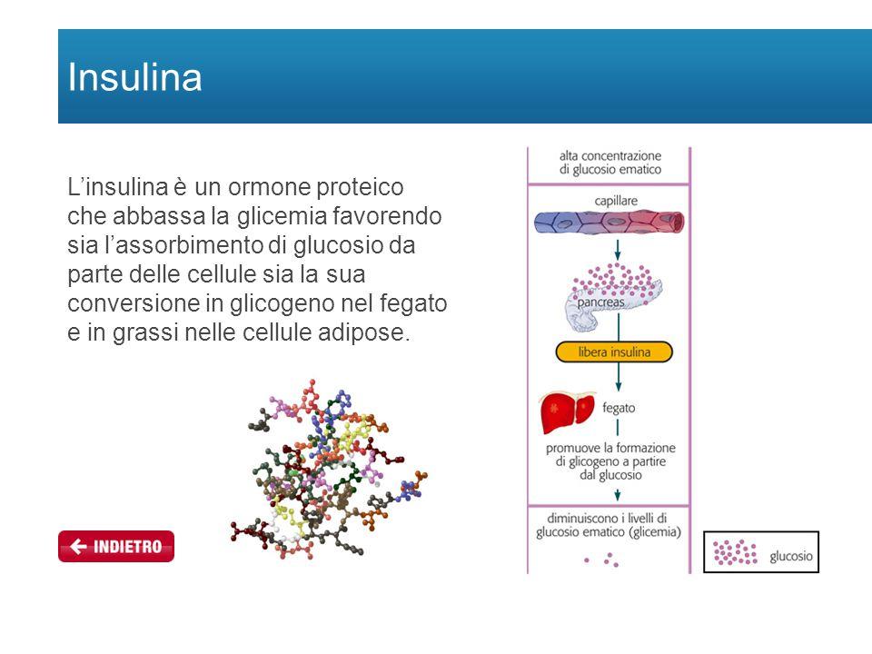 Insulina L'insulina è un ormone proteico che abbassa la glicemia favorendo sia l'assorbimento di glucosio da parte delle cellule sia la sua conversione in glicogeno nel fegato e in grassi nelle cellule adipose.