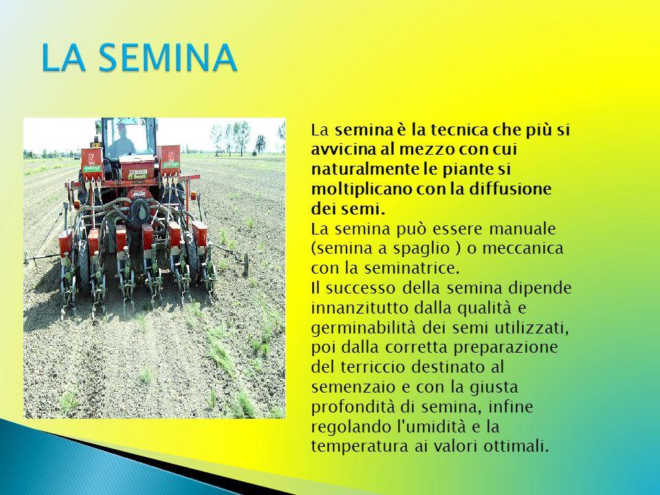 La semina è la tecnica che più si avvicina al mezzo con cui naturalmente le piante si moltiplicano con la diffusione dei semi.