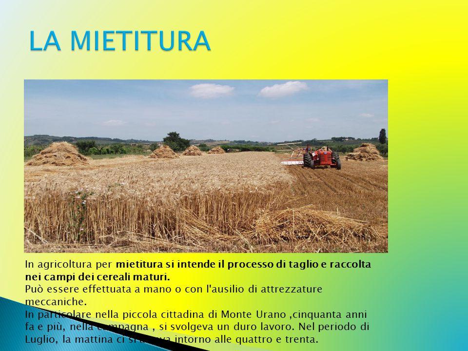 In agricoltura per mietitura si intende il processo di taglio e raccolta nei campi dei cereali maturi.