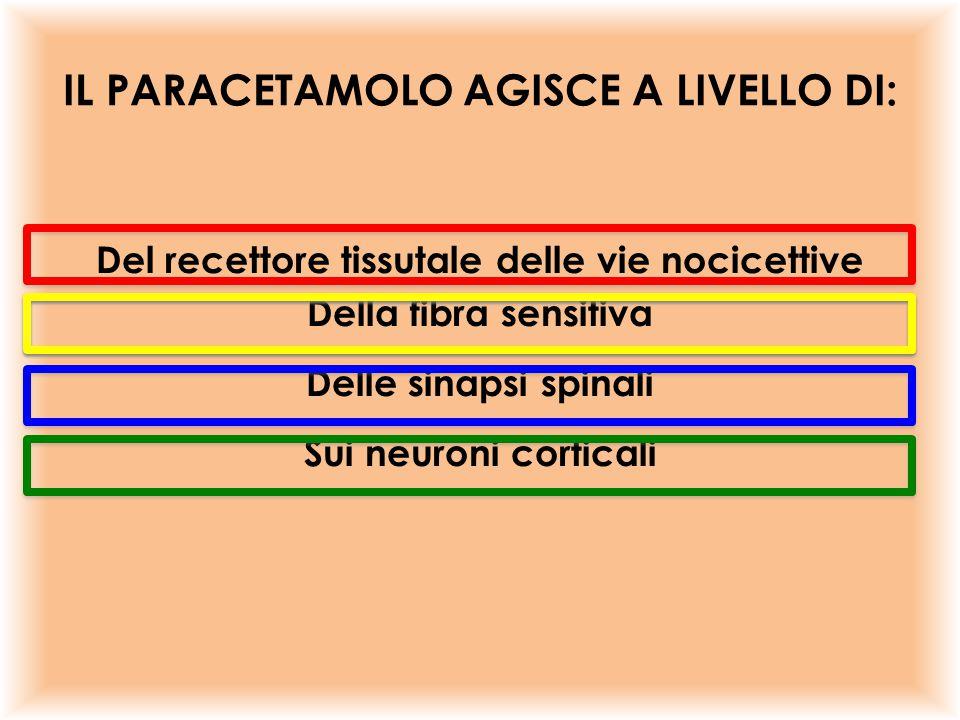 IL PARACETAMOLO AGISCE A LIVELLO DI: Del recettore tissutale delle vie nocicettive Della fibra sensitiva Delle sinapsi spinali Sui neuroni corticali