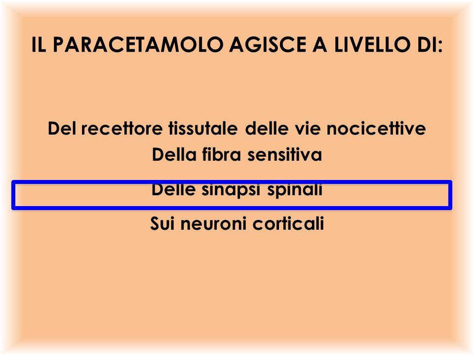 Del recettore tissutale delle vie nocicettive Della fibra sensitiva Delle sinapsi spinali Sui neuroni corticali IL PARACETAMOLO AGISCE A LIVELLO DI: