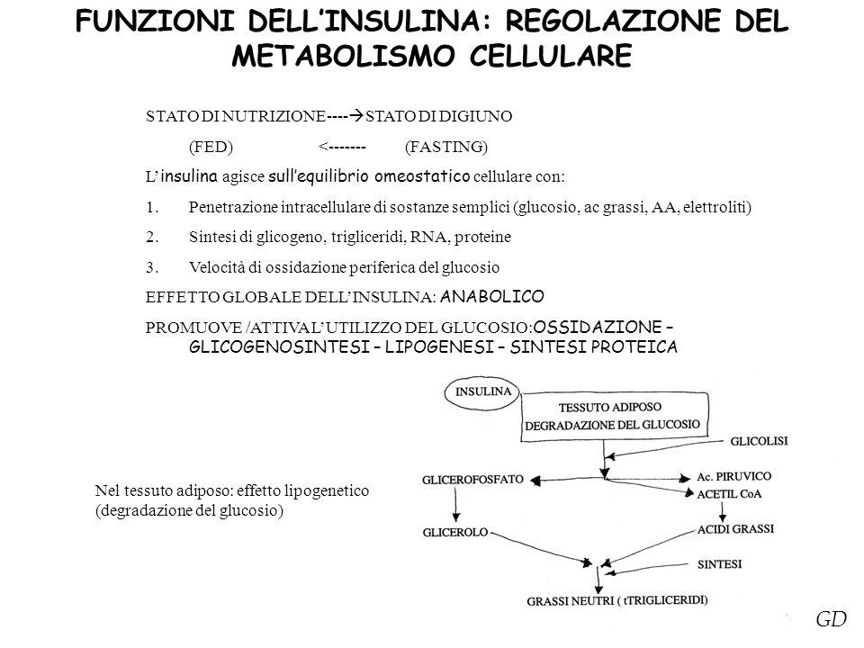 FUNZIONI DELL'INSULINA: REGOLAZIONE DEL METABOLISMO CELLULARE STATO DI NUTRIZIONE----  STATO DI DIGIUNO (FED)<-------(FASTING) L' insulina agisce sull'equilibrio omeostatico cellulare con: 1.Penetrazione intracellulare di sostanze semplici (glucosio, ac grassi, AA, elettroliti) 2.Sintesi di glicogeno, trigliceridi, RNA, proteine 3.Velocità di ossidazione periferica del glucosio EFFETTO GLOBALE DELL'INSULINA: ANABOLICO PROMUOVE /ATTIVA L'UTILIZZO DEL GLUCOSIO: OSSIDAZIONE – GLICOGENOSINTESI – LIPOGENESI – SINTESI PROTEICA Nel tessuto adiposo: effetto lipogenetico (degradazione del glucosio) GD
