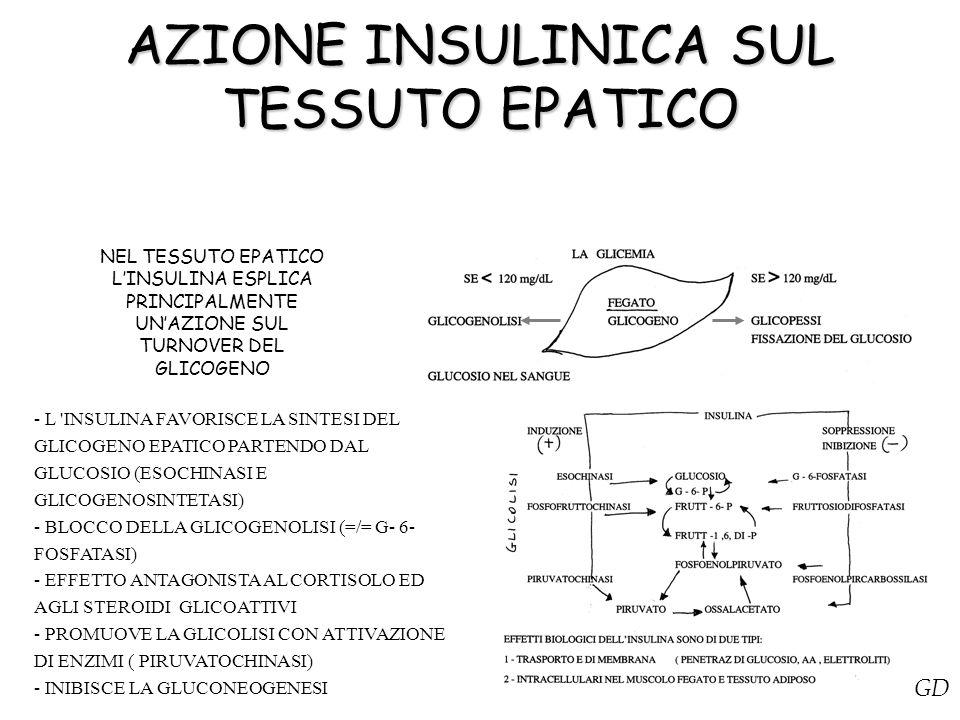 AZIONE INSULINICA SUL TESSUTO EPATICO NEL TESSUTO EPATICO L'INSULINA ESPLICA PRINCIPALMENTE UN'AZIONE SUL TURNOVER DEL GLICOGENO - L 'INSULINA FAVORIS