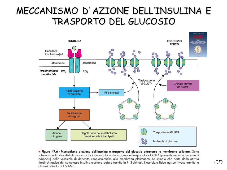 MECCANISMO D' AZIONE DELL'INSULINA E TRASPORTO DEL GLUCOSIO Figura 47.6 - Meccanismo d'azione dell'insulina e trasporto del glucosio attraverso la mem