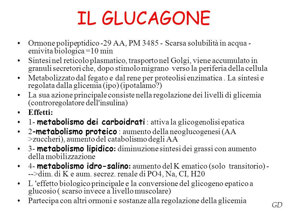 IL GLUCAGONE Ormone polipeptidico -29 AA, PM 3485 - Scarsa solubilità in acqua - emivita biologica =10 min Sintesi nel reticolo plasmatico, trasporto