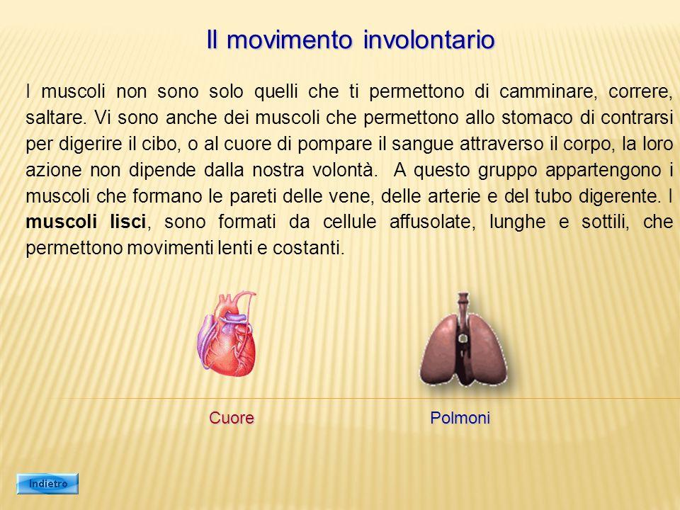 Il movimento involontario I muscoli non sono solo quelli che ti permettono di camminare, correre, saltare. Vi sono anche dei muscoli che permettono al